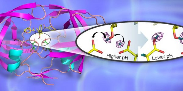 Neutrons probe structure of enzyme critical to development of next-generation HIV drugs
